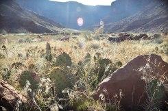 A classic desert shot of cacti!