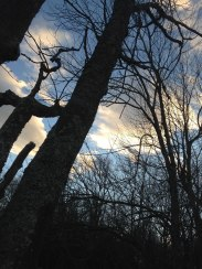 Sun and clouds and trees - how lovely!