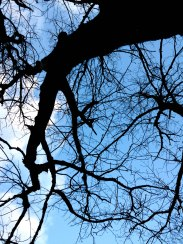 The inter-webbing of the branches of the trees is stunning against the blue, blue sky.