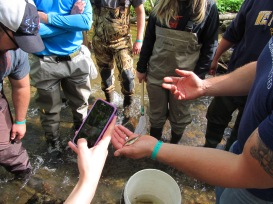 A student snaps a quick picture of the West Virginia state fish, a brook trout. PC: Jillian Clemente