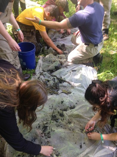 Students dig through muck and sticks to search for fishes and other organisms. Even tadpoles were found. PC: Jillian Clemente