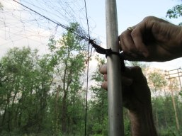 Dr. Rota ties up a few loose ends to set up one of the mist nets.