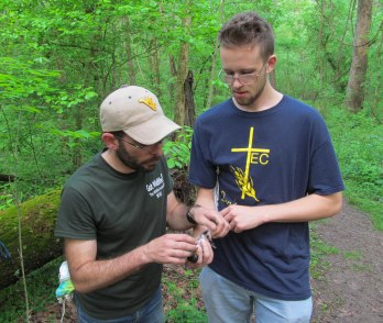 Jimmy Hartley holds the robin as Dr. Rota begins to start checking for the robin's brood patch.